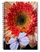 Butterfly On Daisy Spiral Notebook