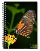 Butterfly On Orange Bloom Spiral Notebook