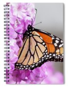 Butterfly On Phlox Flowers Spiral Notebook