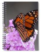Butterfly On Phlox Spiral Notebook