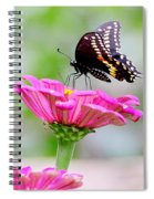 Butterfly On Pink Flower Spiral Notebook
