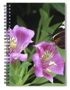 Butterfly On Pink Lillies Spiral Notebook