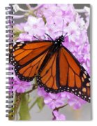 Butterfly On Pink Phlox Spiral Notebook