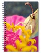 Butterfly On Zinnia Spiral Notebook