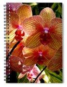 Butterfly Orchids Spiral Notebook