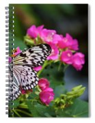 Butterfly Pollinating Flower Spiral Notebook