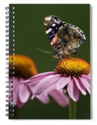 Butterfly Red Admiral On Echinacea Spiral Notebook