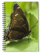 Butterfly Resting Spiral Notebook