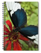 Butterfly Sara Longwing II Spiral Notebook