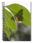 Butterfly Shadow Spiral Notebook