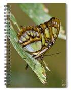 Butterfly Siproeta Stelenes Spiral Notebook