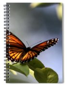 Butterfly -  Soaking Up The Sun Spiral Notebook
