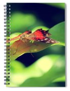 Butterfly Taking The High Ground Spiral Notebook