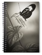 Butterfly Warm Black And White Spiral Notebook