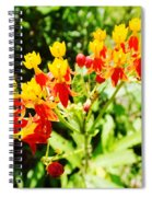 Butterfly Weed 2 Spiral Notebook