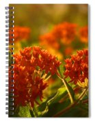 Butterfly Weed In The Sunset Spiral Notebook