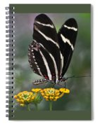 Butterly Spiral Notebook