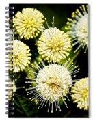Buttonbush Spiral Notebook