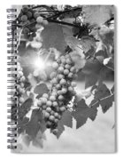 Bw Lens Flare Hanging Thompson Grapes Sultana Spiral Notebook