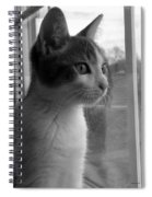 Bw The Inquisitive Kitty Jackson Spiral Notebook