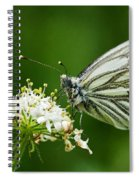 Cabbage Butterfly Spiral Notebook
