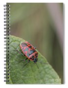 Cabbage Shield Bug Spiral Notebook