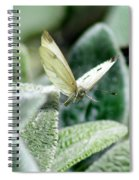Cabbage White Butterfly In Flight Spiral Notebook