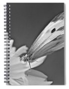 Cabbage White Butterfly On Cosmos - Black And White Spiral Notebook