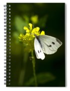 Cabbage White Butterfly On Yellow Flower Spiral Notebook