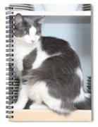 Cabinet Cat Spiral Notebook