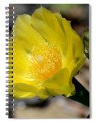Cactus Bloom Spiral Notebook