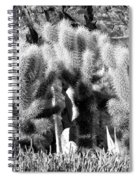 Cactus In Bw Spiral Notebook