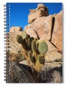 Cactus In Hidden Valley Spiral Notebook