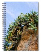 Cactus On A Cliff Spiral Notebook