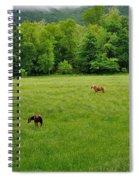 Cades Cove Horses Spiral Notebook
