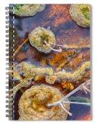 Cafe Au Lait Hot Springs Spiral Notebook