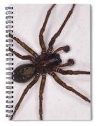 Caffeine Crazed Arachnoid Spiral Notebook