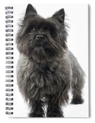 Cairn Terrier Dog Spiral Notebook