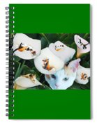 Cala In Callas Spiral Notebook