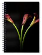 Cala Lily 4  Spiral Notebook