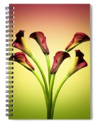 Cala Lily 6 Spiral Notebook