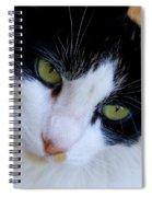 Calico 1 Spiral Notebook
