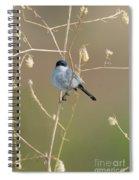 California Gnatcatcher Spiral Notebook