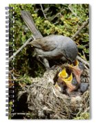 California Gnatcatcher Feeding Young Spiral Notebook