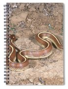 California Kingsnake Spiral Notebook