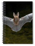 California Leaf-nosed Bat Spiral Notebook