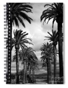 California Palms - Black And White Spiral Notebook