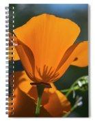 California Poppies  Eschscholzia Spiral Notebook