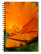 California Poppy Spiral Notebook