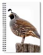 California Quail Spiral Notebook